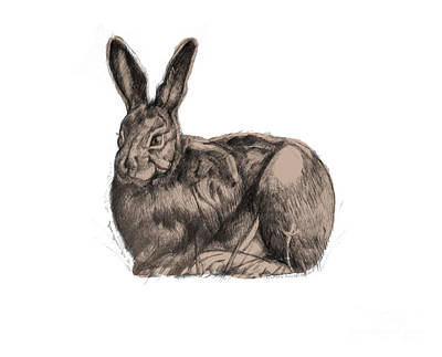 Drawing - Sitting Bunny Jan 2017 by Donna Huntriss