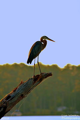 Photograph - Sitting High On The Log by Lisa Wooten