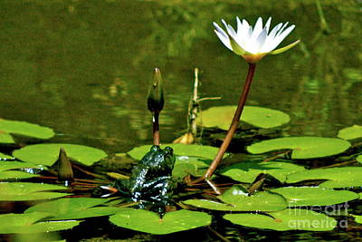 Photograph - Sitting In A Waterlily Pond by Lehua Pekelo-Stearns