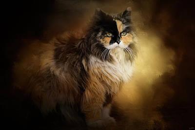Staring Cat Photograph - Sitting In Autumn by Jai Johnson