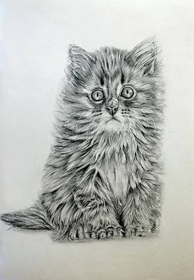 Drawing - Sitting Kitten by Michel Angelo Rossi