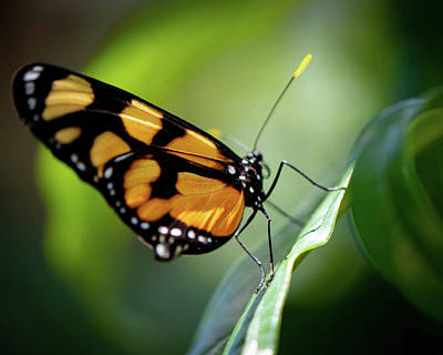 Photograph - Sitting On A Leaf  by Joseph Caban