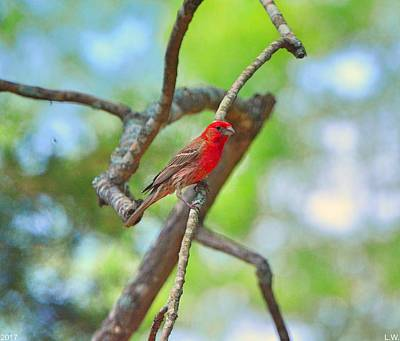 Photograph - Sitting On A Tree Branch by Lisa Wooten