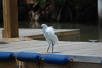 Sitting On The Dock Of The Bay Art Print by Clay Peters Photography