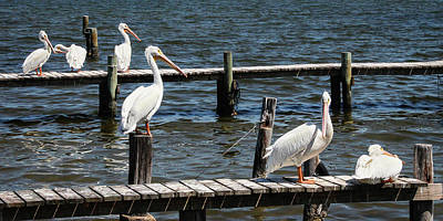 Photograph - Sitting On The Dock Of The Bay by Dawn Currie