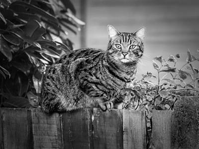 Sitting On The Fence Art Print