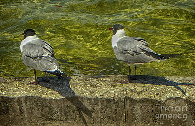 Photograph - Sitting On The Seawall by Judy Hall-Folde