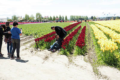 Photograph - Sitting On The Tulips by Tom Cochran
