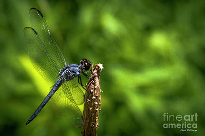 Photograph - Sitting Pretty 2 Dragonfly Art by Reid Callaway
