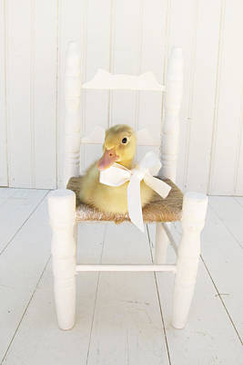 Ducklings Photograph - Sitting Pretty by Amy Tyler