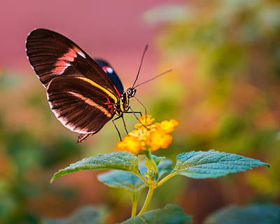 Photograph - Sitting Pretty by Bill Pevlor