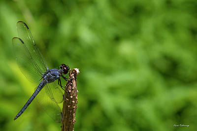 Photograph - Sitting Pretty Dragonfly Art by Reid Callaway