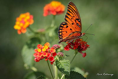 Photograph - Sitting Pretty Gulf Fritillary Butterfly by Reid Callaway