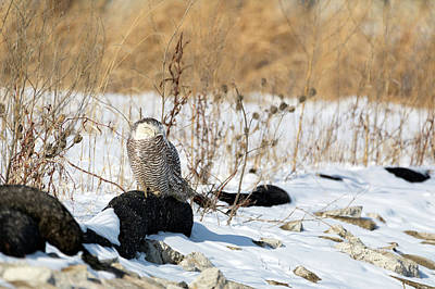 Photograph - Sitting Snowy by Brian Hale