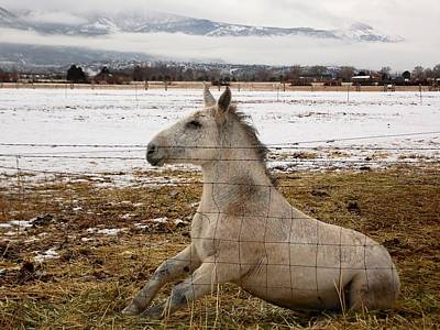 Photograph - Sitting White Mule Cedar City Utah by Deborah Moen