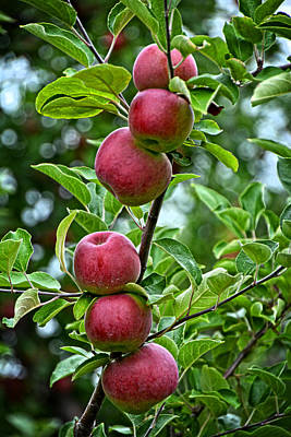 Photograph - Six Apples by Mike Martin