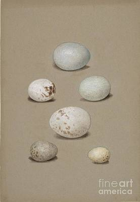 Pigeon Painting - Six Bird's Eggs by Celestial Images