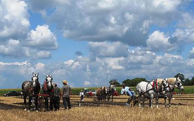 Photograph - Six Horses by Ian  MacDonald