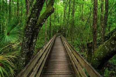 Photograph - Six Mile Boardwalk - Landscape by Ron Pate