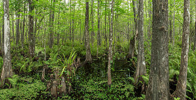 Six Mile Cypress Slough Preserve Art Print by Panoramic Images