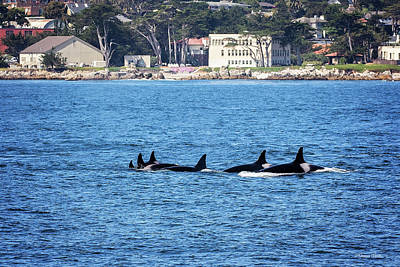 Photograph - Six Orcas Hunting by Deana Glenz