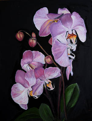 Six Orchids Art Print