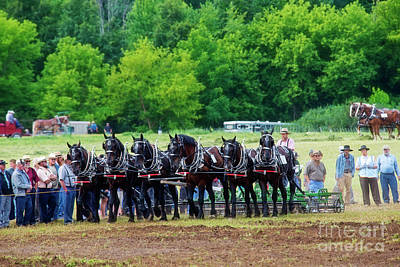 Photograph - Six Percheron by David Arment