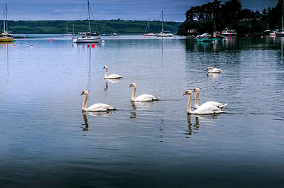 Photograph - Six Swans by Phyllis Taylor