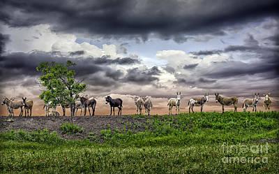 Photograph - Sixteen Donkeys One Tree by Walt Foegelle