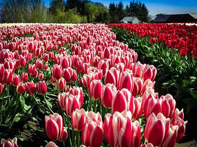 Skagit Digital Art - Skagit County Tulip Festival by Mia DeBolt