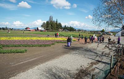 Photograph - Skagit County Tulip Wandering by Tom Cochran