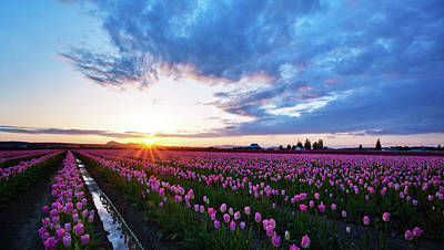 Skagit Photograph - Skagit Floral Sunset by Mike Reid