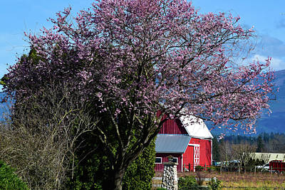 Photograph - Skagit Spring With Red Barn by Tom Cochran