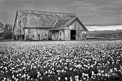 Photograph - Skagit Valley Barn Bw by Sonya Lang