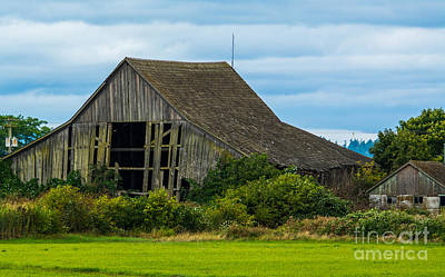 Photograph - Skagit Valley Barn by Calvin Fannin