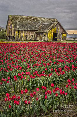 Photograph - Skagit Valley Barn In Red by Sonya Lang