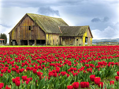 Photograph - Skagit Valley Barn by Kyle Wasielewski