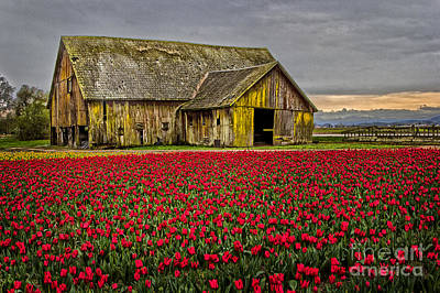Photograph - Skagit Valley Barn by Sonya Lang