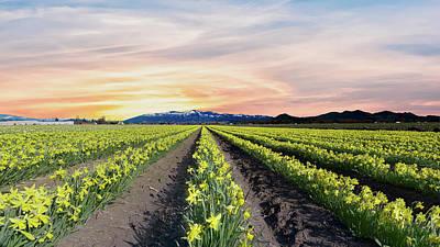 Lady Bug - Skagit Valley Daffodils by Craig Voth