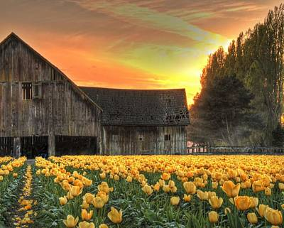 Photograph - Skagit Valley Gold by Jeff Cook