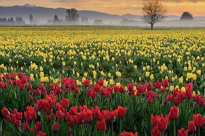 Skagit Photograph - Skagit Valley Misty Morning by Dan Mihai