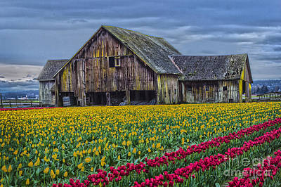 Photograph - Skagit Valley Morning by Sonya Lang