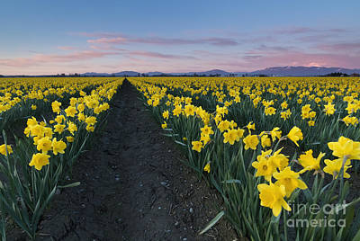 Skagit Photograph - Skagit Valley Sunset by Mike Dawson