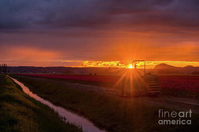 Skagit Photograph - Skagit Valley Tractor Sunset Sunstar by Mike Reid
