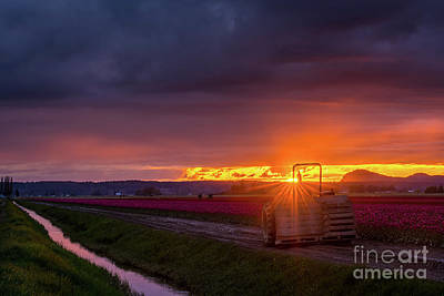 Photograph - Skagit Valley Tractor Sunstar by Mike Reid