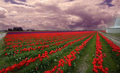 Skagit Digital Art - Skagit Valley Tulip Field, Spring by Jeff Burgess