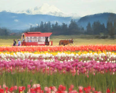 Photograph - Skagit Valley Tulip Time by Jeanette Mahoney