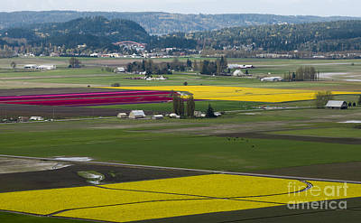 Photograph - Skagit Valley - Tulips, Daffies, And Rainbow Bridge by Louise Magno