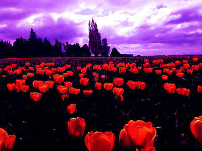 Skagit Valley Tulips Art Print by Eddie Eastwood