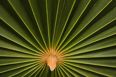 Skc 9959 Palm Spread Art Print